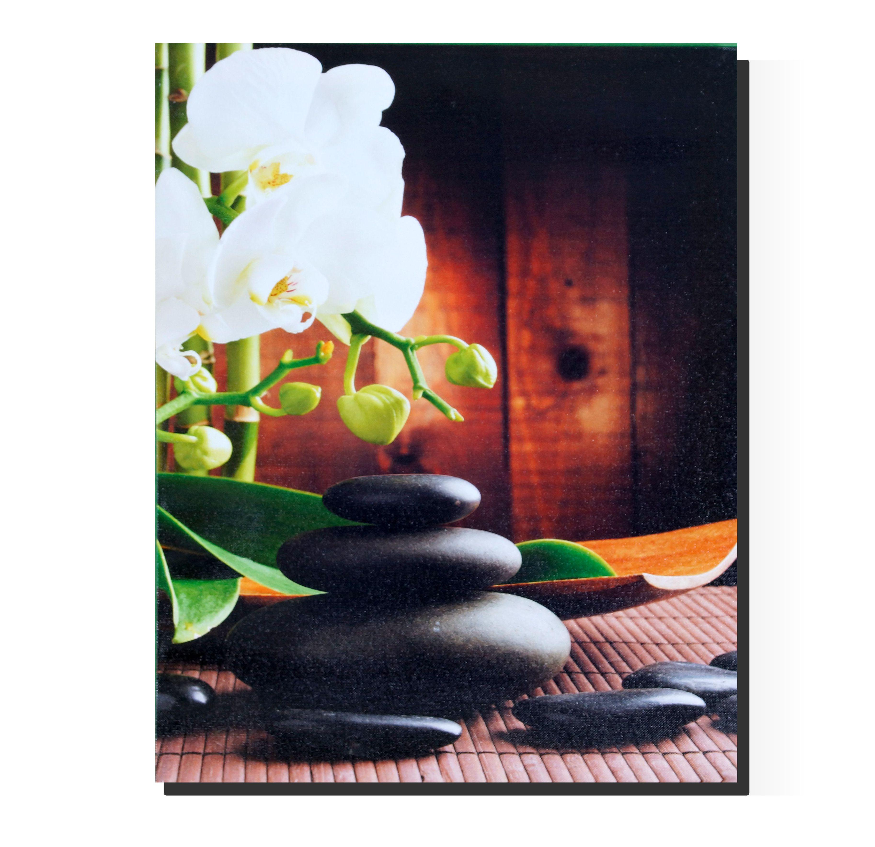 davide24 orchideen wei. Black Bedroom Furniture Sets. Home Design Ideas